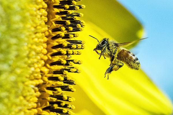 Honey Bee Zip Line